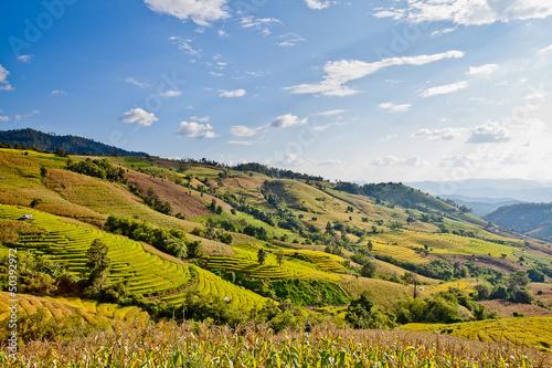 Rice field terraced.