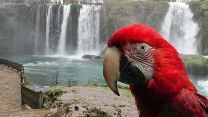 Parrot in front of the Waterfall