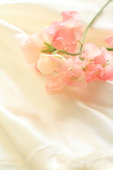 pink sweetpea on silk for background image
