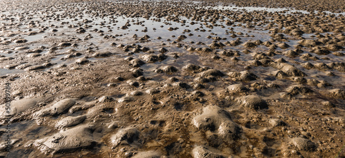 Muddy beach at low tide