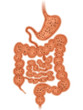 Magen-Darm-Trakt mit Luftblasenbildung – Vektor und freigestellt