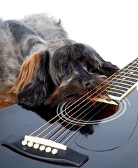 Sad doggie and guitar.