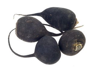 Black Radish, turnip, isolated on white