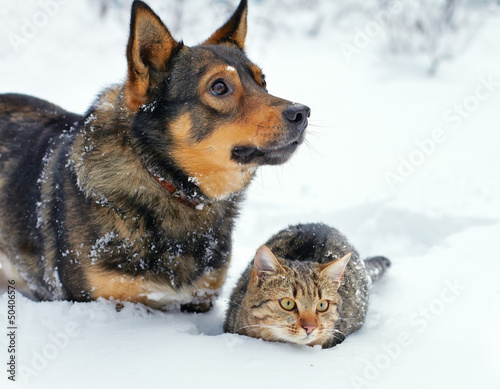 Dog and cat sitting in the snow