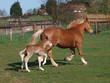 Trotting Mare and Foal