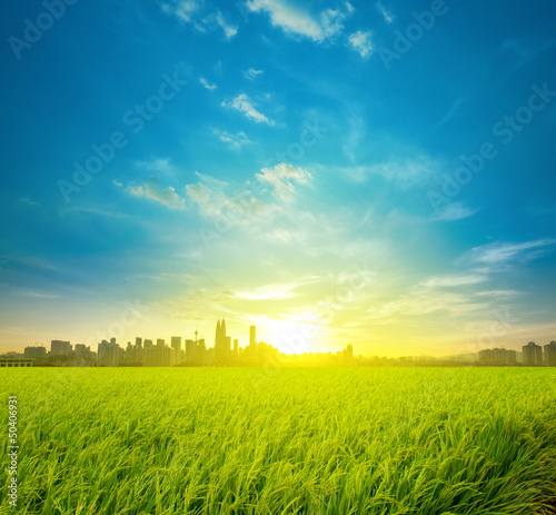 Rice field plantation and city