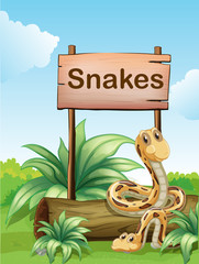 Two snakes beside a wooden signboard