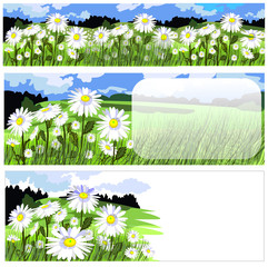 horizontal banners with beautiful chamomile meadow
