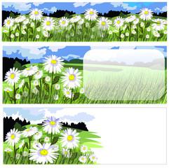 horizontal banners with beautiful chamomile meadow