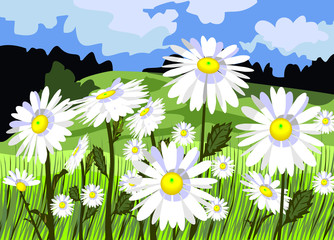 Beautiful meadow with daisies