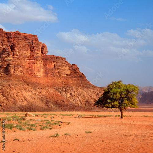 Drzewo na pustyni - kwadrat