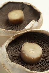 Raw flat mushrooms