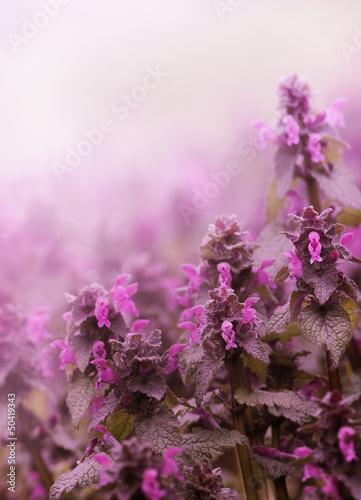 Spring Flower © hitdelight