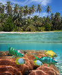 Tropical beach and coral reef
