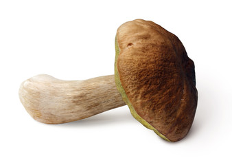 Mushroom on white background