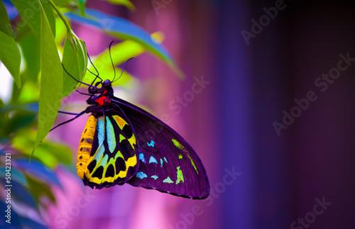 Deurstickers Vlinder Neon butterfly