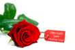 """""""Alles Gute zum Muttertag"""" - Karte an roter Rose"""