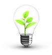 plant inside bulb