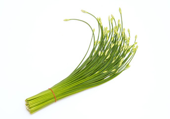 Chinese Chives flower