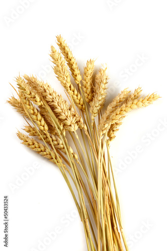 Stalks of wheat ears