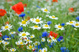 Blumenwiese Wildblumen
