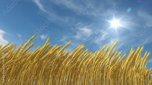 growing wheat, 3d animation with an alpha matte