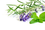 herbs in white background