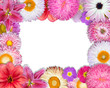 Flower Frame Pink, Purple, Red Flowers on White