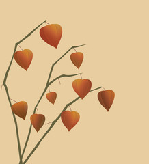 Physalis branches.