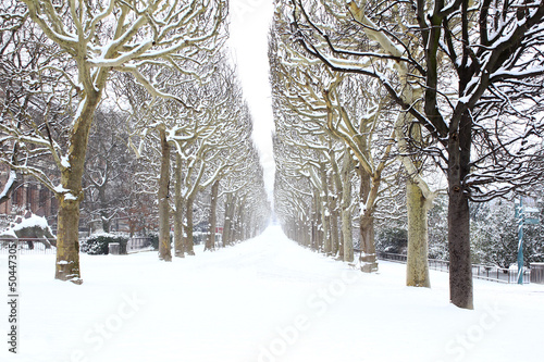 Jardin de Plantes under the snow, Paris