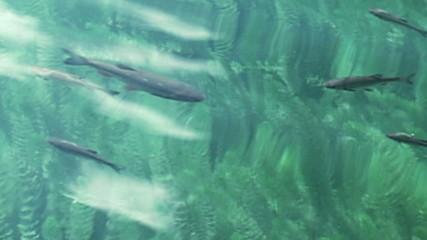 Fish swim in the water