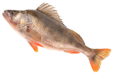 bass fish on white background