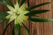 hintergrund holz rustikal pflanze I