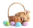 Fluffy foxy rabbit in basket with Easter eggs isolated on white - 50451119