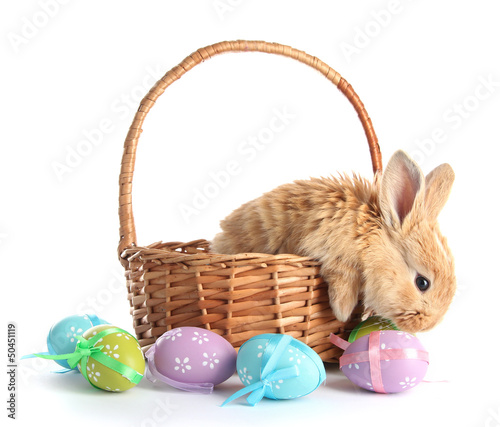 Foto op Plexiglas Egg Fluffy foxy rabbit in basket with Easter eggs isolated on white