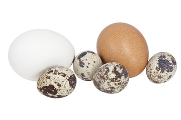 Different eggs on the white background