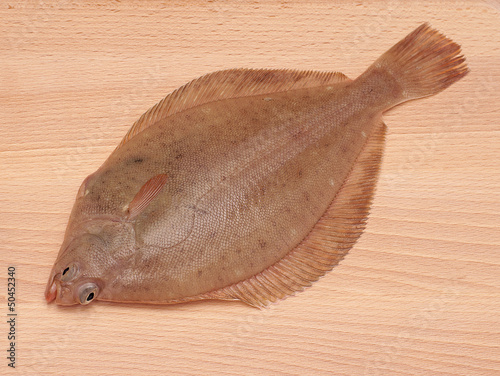 Dab Fish on Wood Background