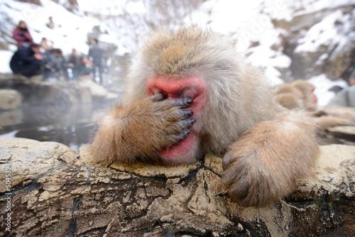 Foto op Plexiglas Japan Japanese Snow Monkey