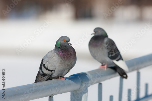 two doves on the railing