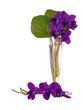 Wild spring violets - viola riviniana, in small glass vase isola