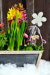 Blumen im Frühling Holz
