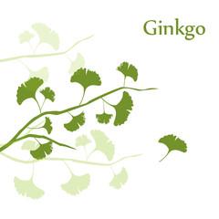 Ginkgo Hintergrund