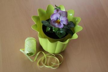 Blumentopf mit Stiefmütterchen als Geschenk