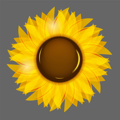 Sunflowers vector illustration background vector illustration