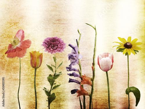 Obraz Flowers Background