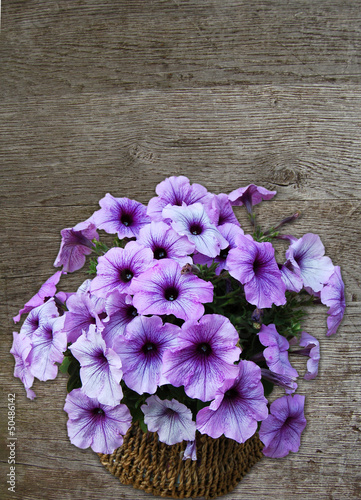 canvas print picture petunia flowers against wood background
