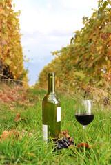 Wine in Lavaux region, Switzerland