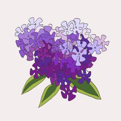 Violet phlox.