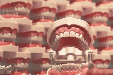 Zahnmedizinische Modelle (formatfüllend)