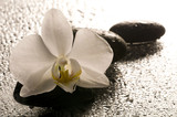 White orchid and stones over wet surface with reflection